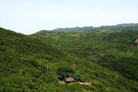 足摺岬の森