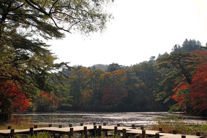 神戸市立森林植物園長谷池