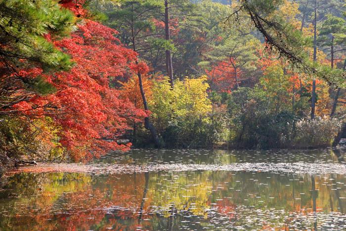 長谷池の紅葉