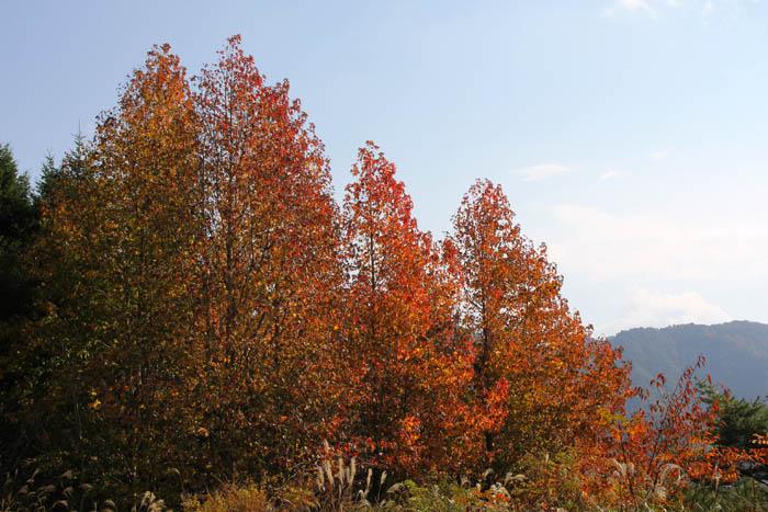 神戸市立森林植物園紅葉のシアトルの森