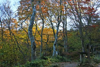 紅葉の皿ヶ嶺