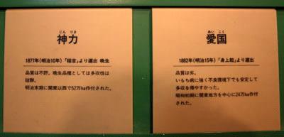 宇和米博物館