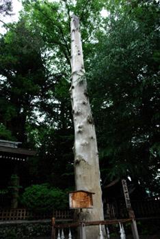 諏訪大社下社秋宮の御柱