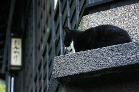 黒川温泉の猫