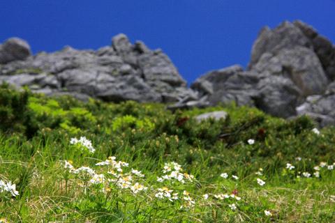 千畳敷カールの花畑