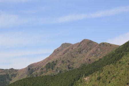 アケボノツツジの西赤石山