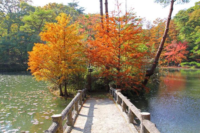 紅葉の神戸市立森林植物園長谷池