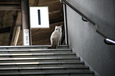 内子駅の猫