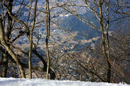 雪の皿ヶ嶺ブナの原生林