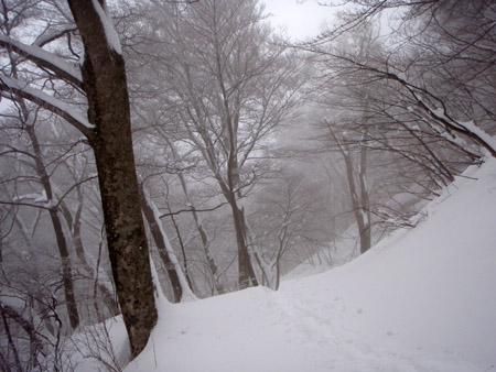 雪の大山治山林道