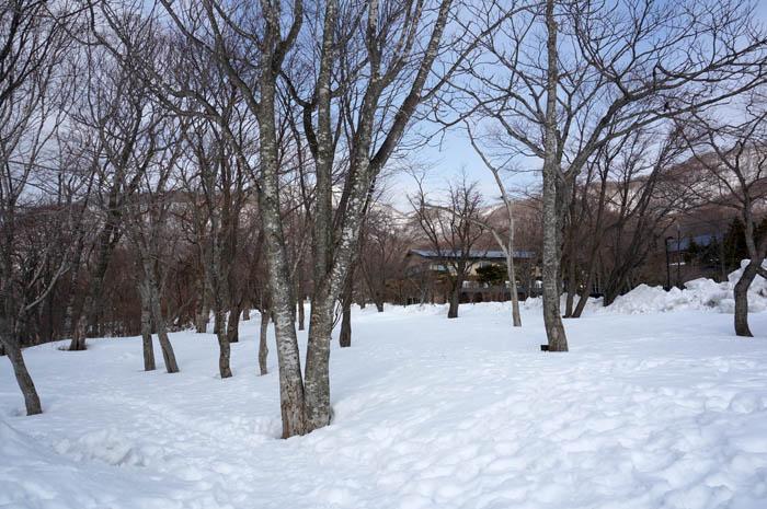 冬の支笏湖湖畔の森