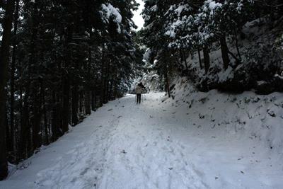 白猪の滝林道
