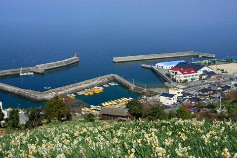 日本水仙花開道