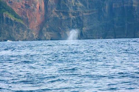 ハートロックとクジラ