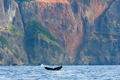 小笠原のクジラ