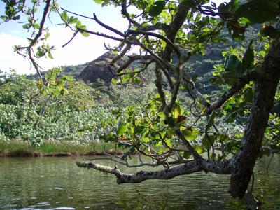 父島の八ツ瀬川