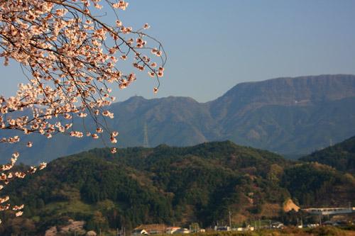 愛媛県森の交流センターの桜と皿ヶ嶺