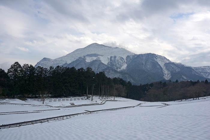 冬の芝桜の丘