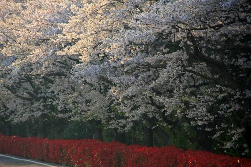 愛媛県森の交流センター花見