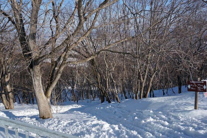 冬の藻岩山の森