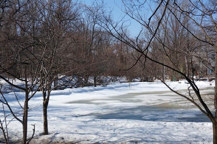 北海道大学冬の大野池