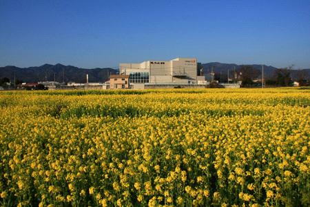 坊ちゃん劇場と見奈良の菜の花畑