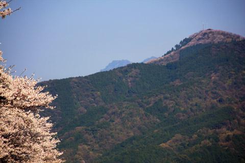 雪の石鎚山と桜の塩ヶ森