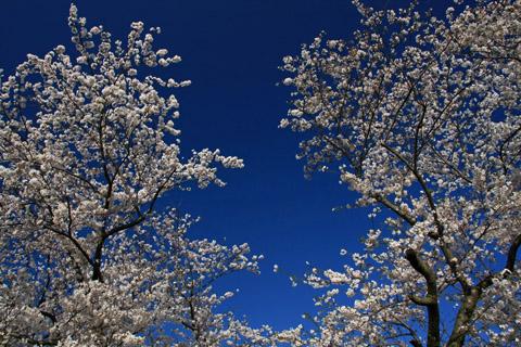 愛媛県森の交流センターの花見