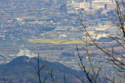 見奈良の菜の花畑空撮