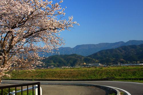 愛媛県森の交流センターの桜と重信川
