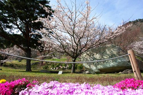 翠波高原ワシントン桜の園