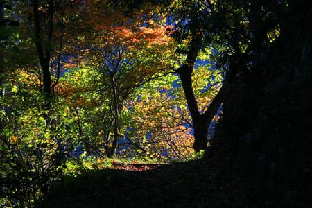 紅葉の遠登志渓谷