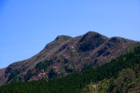 アケボノツツジ咲く西赤石山