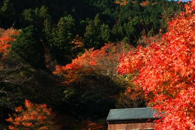 紅葉の東平