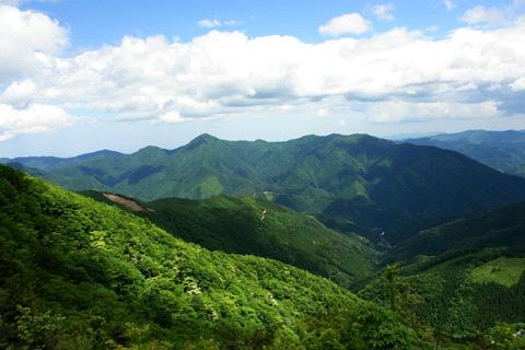四万十川源流の森