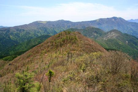 アケボノツツジの西赤石山登山