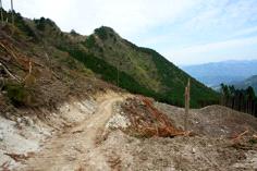 唐岬の滝への道