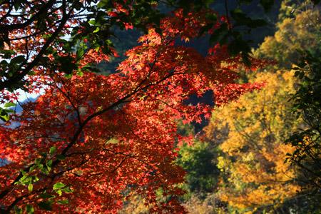 別子銅山の紅葉