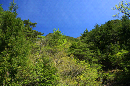 別子銅山新緑登山