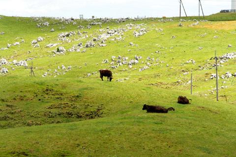 四国カルストの牧場
