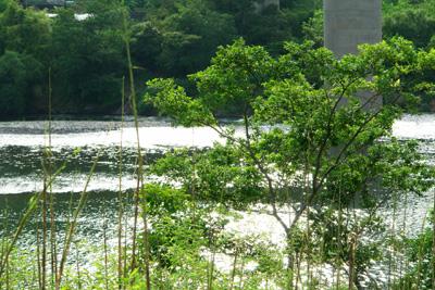 川の駅カヌー館キャンプ場と四万十川