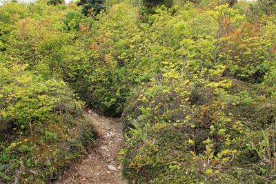 別子銅山西山への登山道
