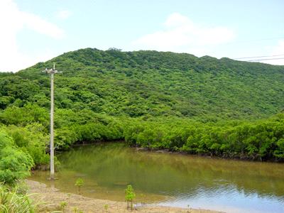 西表島の小川