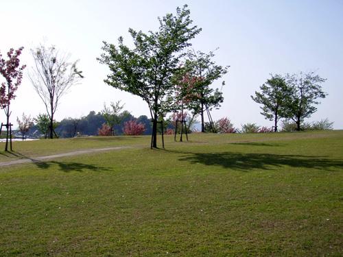 松山総合公園さくらの丘
