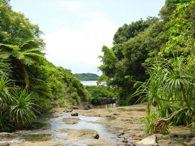 西表島の川