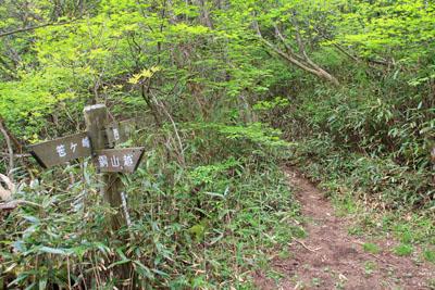 笹ヶ峰への縦走路