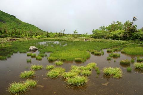 天狗原の池塘