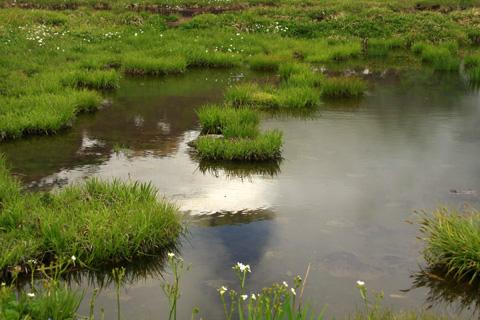 天狗原の湿原