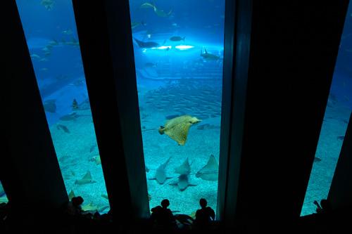 沖縄美ら海水族館オーシャンブルー