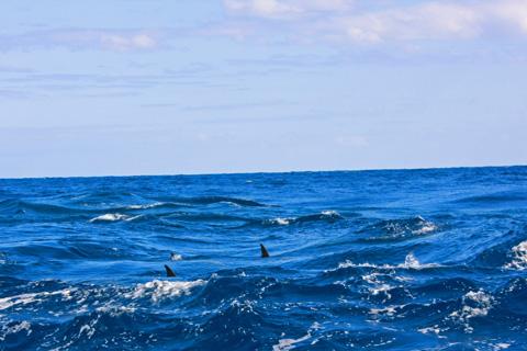 母島のイルカ